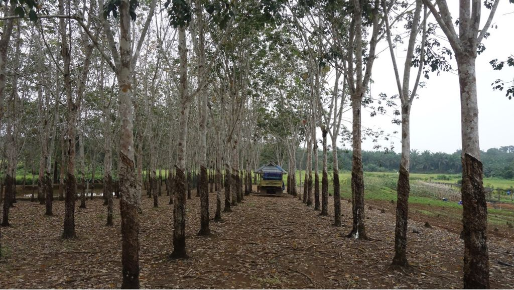 Field Notes from West Kalimantan: The Unmet Needs of Rubber Farmers