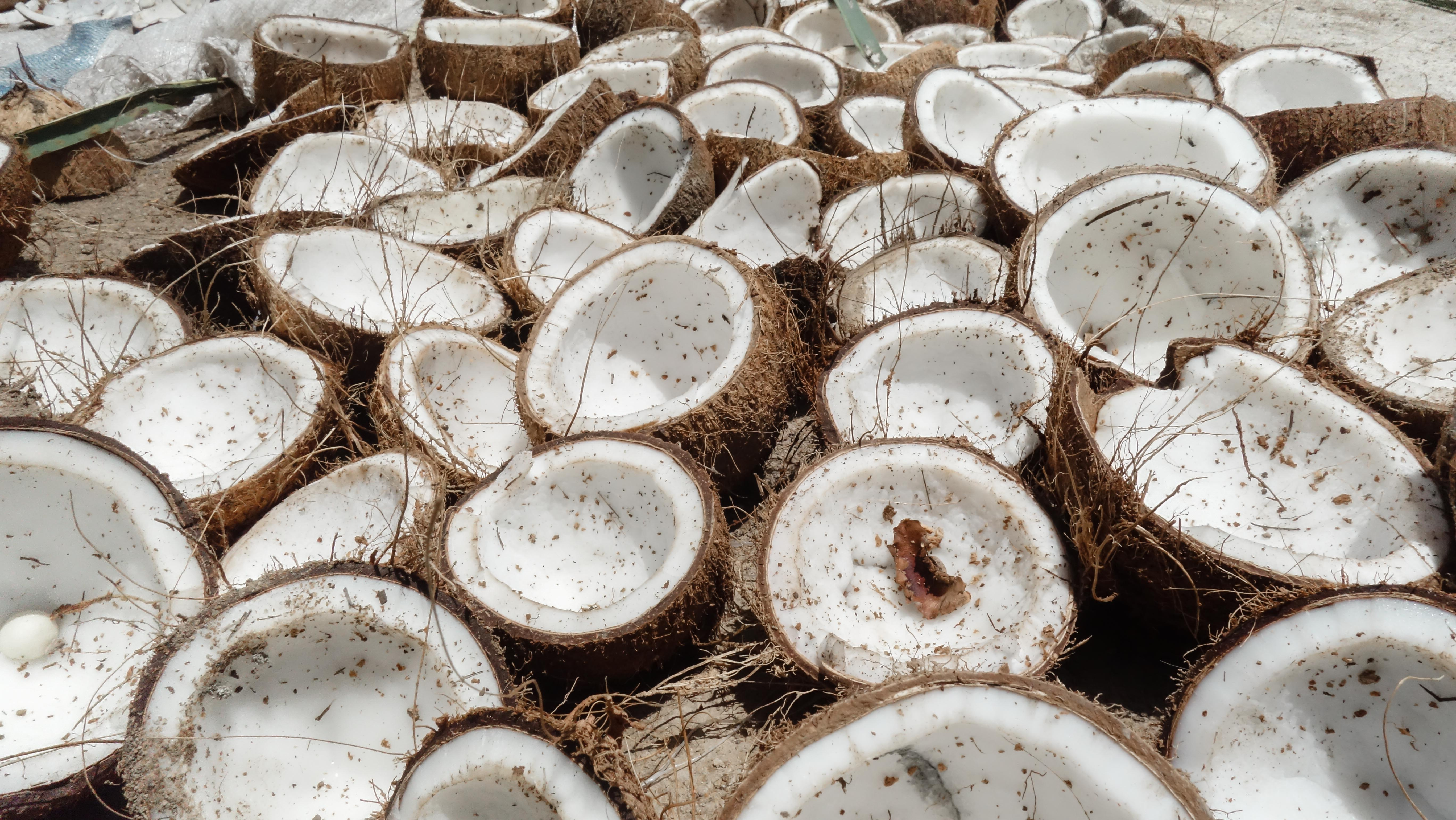 A Tough Nut to Crack: Maximizing Farmer Profits from a Coconut Tree