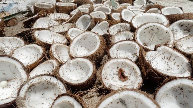 A Tough Nut to Crack: Maximizing Farmer Profits from a Coconut Tree