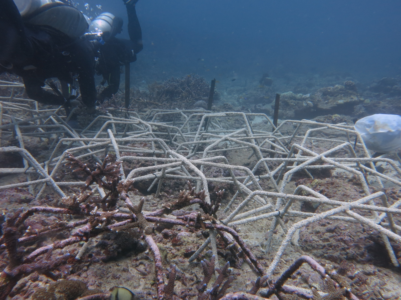 Supporting Coral Regeneration with the Coral Spider Method