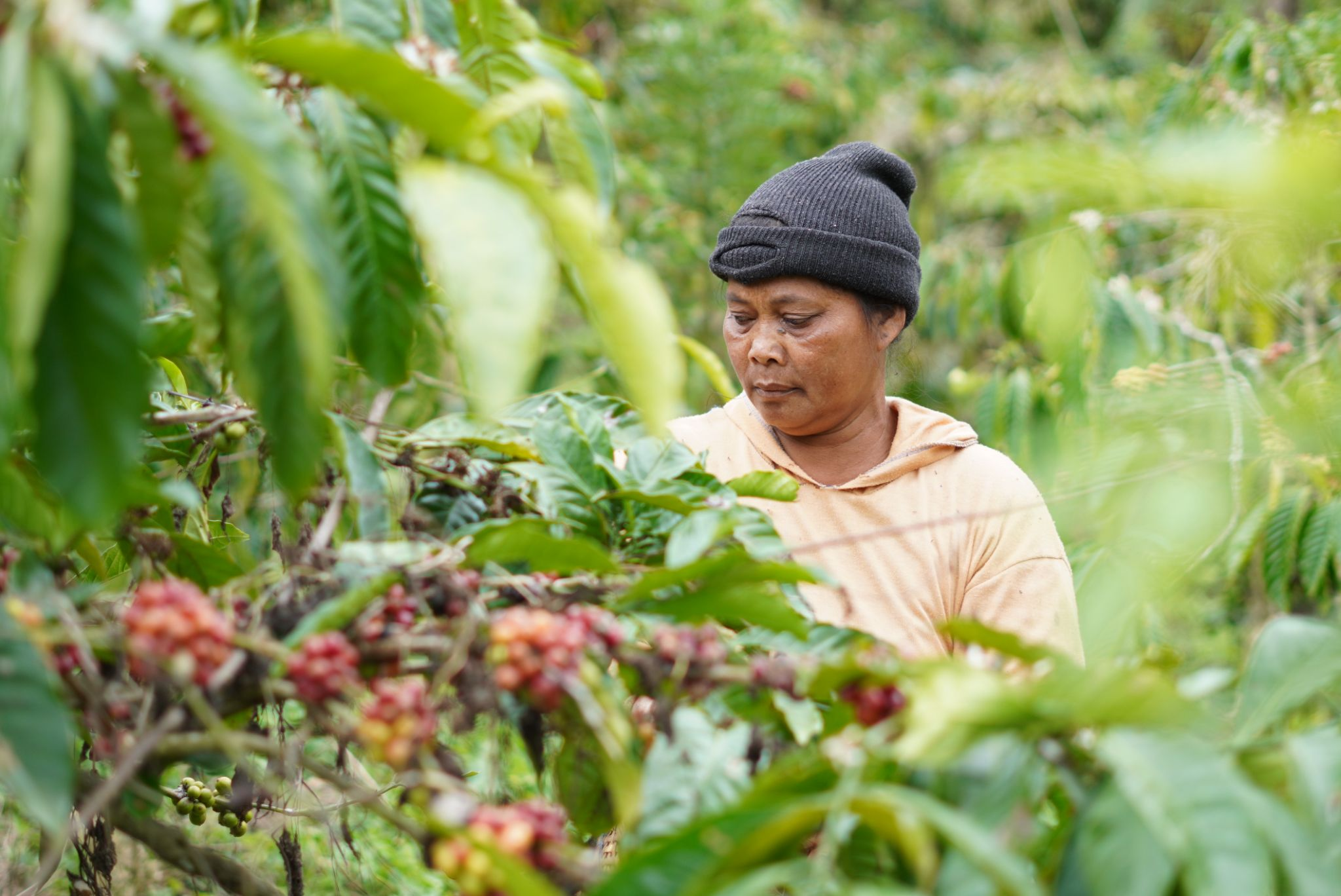 Supporting Smallholder Coffee Farmers in Bali: Capacity Building for Farmers & Youths
