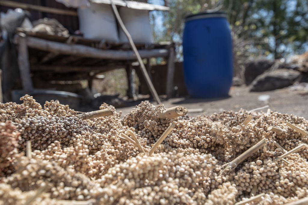 Increasing Food Security and Income with Better Grain Storage Solutions Phase Two