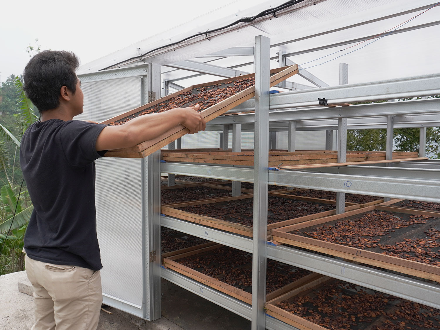Solar Drying Solutions For Cacao And Coffee Smallholder Farmers In Tabanan, Bali